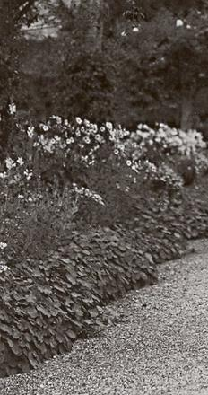 Monet photographed in his garden's main alley