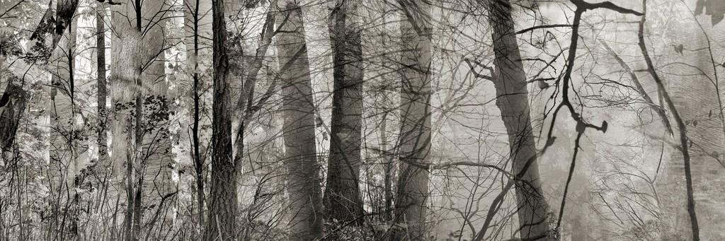 Walden: Woods and Pond, 2016 by Abelardo Morell