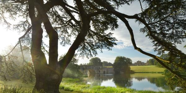 The Park and Gardens designed by Capability Brown will form the backdrop for Tino Seghal's outdoor exhibition at Blenheim this summer.  Image: Blenheim Palace