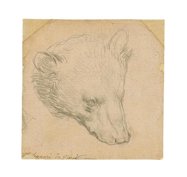 Leonardo da Vinci's Head of a Bear will be offered for sale at Christie's in London on July 8.