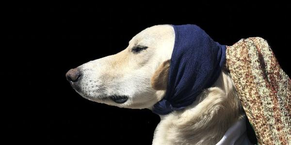 "From @BlairBraverman, ""Here is Dog With(out) a Pearl Earring"""