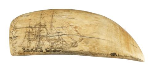 One of 250 pieces on scrimshaw on view