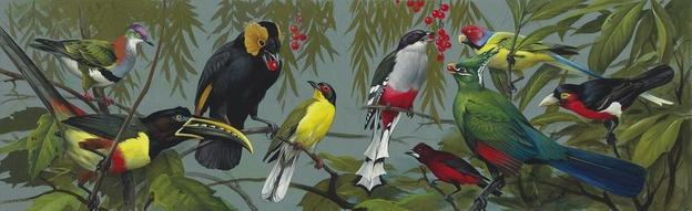 ROGER TORY PETERSON (1908 - 1996) Tropical Birds (illustration for The World of Birds) gouache on paper, 8 x 14 1/2 inches.  Estimate: $15,000 - 25,000.  Barcode: 27872130