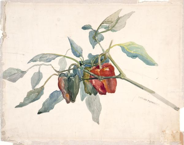 A watercolor design study, c.  1901, by Alice Carmen Gouvy depicting bell peppers on display at the Morse Museum beginning March 2.