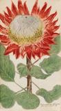 A lavishly made Baroque book with 1000 color-engraved plates of plants and flowers by Johann Wilhelm Weinmann lead the auction with a result of € 56.400* (reserve price € 45.000).