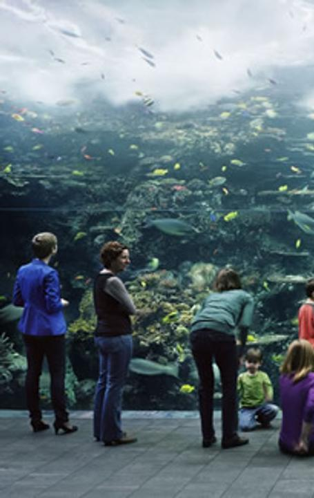 Thomas Struth (German, born 1954) Aquarium, Atlanta, Georgia, 2013.  Chromogenic print.  High Museum of Art, Atlanta, purchase with funds from the Donald and Marilyn Keough Family, the Hagedorn Family, Lucinda W.  Bunnen for the Bunnen Collection, and through prior acquisitions, 2014.23.  © Thomas Struth