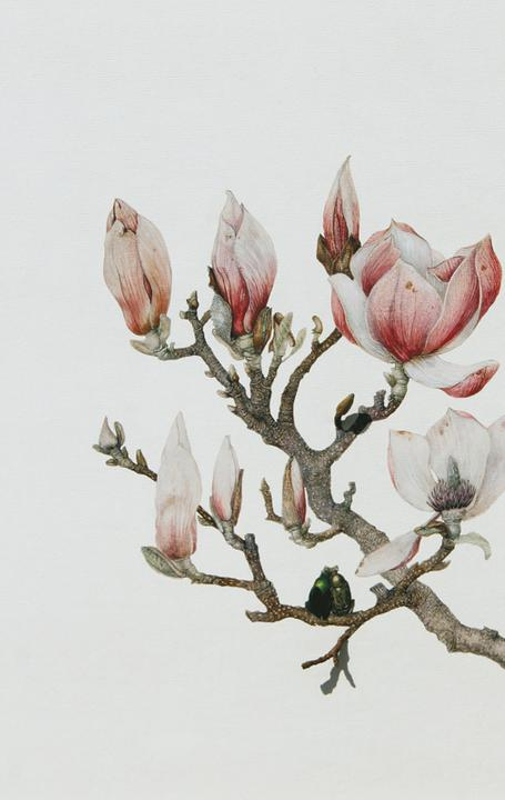 "Maureen McCabe Magnolia with Beetles signed verso mixed media and pastel on archival inkjet 19"" x 13"" x 1 1/2"""