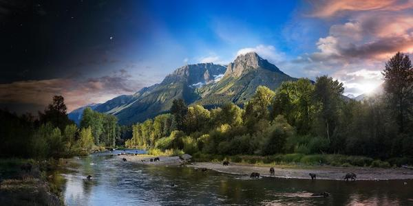 Stephen Wilkes, Grizzly Bears Bella Coola, British Columbia, Canada, Day to Night, 2018.  Courtesy of Robert Klein Gallery, Boston.