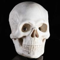 Finely carved and oversized memento mori marble skull (est $4/6,000), Eighteenth-Nineteenth Century, Italian, probably from a tomb or crypt, on later stand, 15 by 10 by 7 ½ inches (skull), 9 by 5 ½ by 5 ½ inches (base).