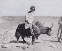 Hilda May Gordon on yak back at the Khardong Pass, 1924