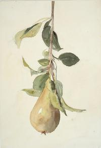 Pear, not dated.  Barbara Leigh Smith Bodichon (1827–1891).  Watercolor and graphite on wove paper, 9 13/16 × 6 3/4 inches.  Delaware Art Museum, Acquisition Fund, 2017.